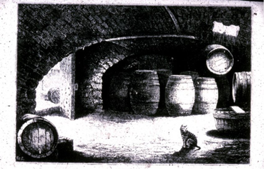 Archive cat image